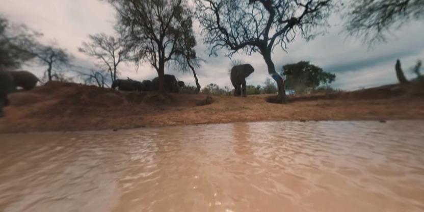 非洲大象VR视频